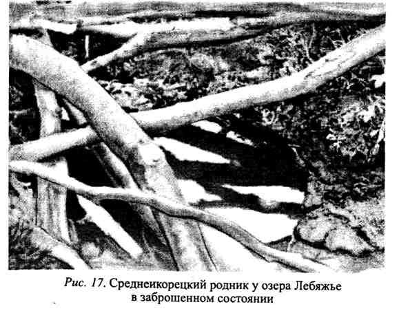 Среднеикорецкий родник у озера Лебяжье в Воронежской области