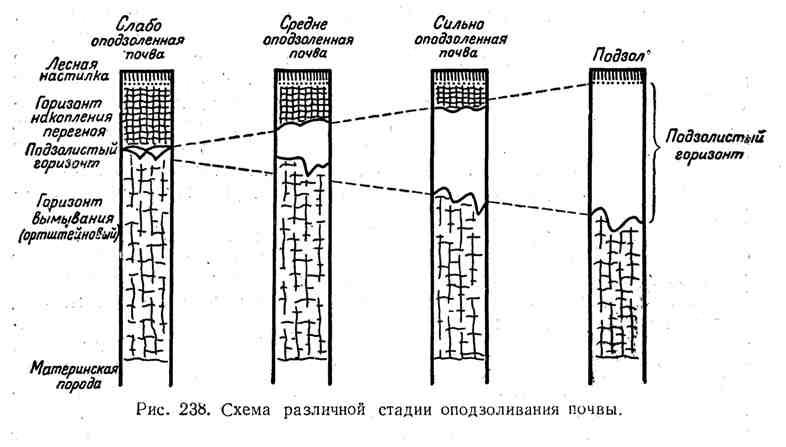 Схема различной стадии оподзоливания почвы