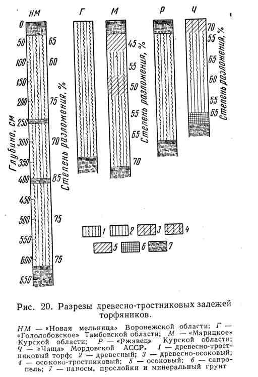 Разрезы древесно-тростниковых залежей торфяников