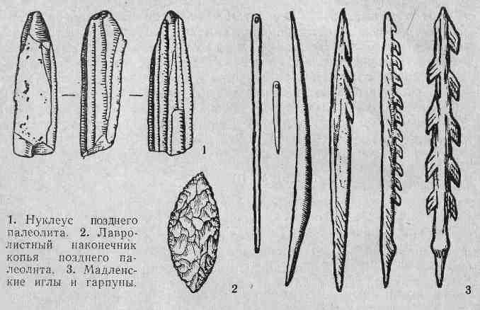 Нуклеус позднего палеолита, лавролистный наконечник копья позднего палеолита, мадленские иглы и гарпуны