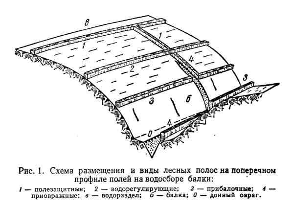 Схема размещения и виды лесных полос на поперечном профиле полей на водосборе балки