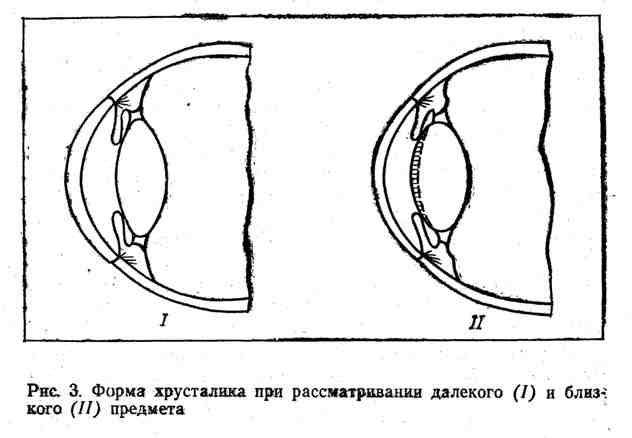 Форма хрусталика при рассмотрении далёкого и близкого предмета