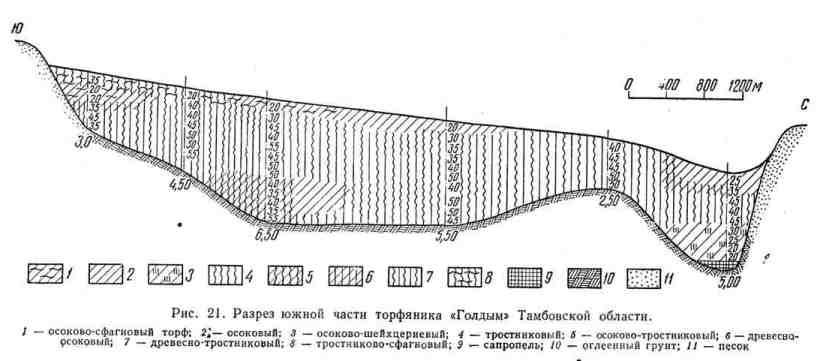 """Разрез южной части торфяника """"Голдым"""" Тамбовской области"""