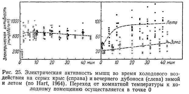 Электрическая активность мышц во время холодового воздействия на серых крыс и вечернего дубоноса зимой и летом