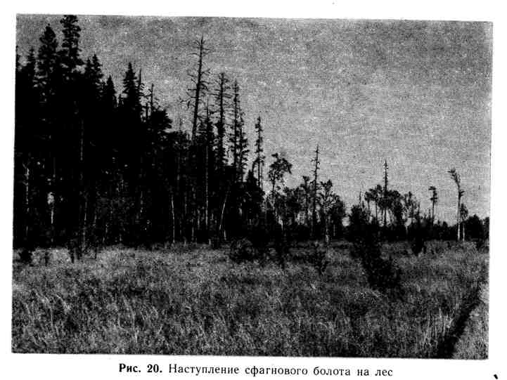 Наступление сфагнового болота на лес