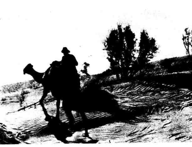 Пустыня Восточные Каракумы. Барханная гряда с кустами кандыма и саксаула