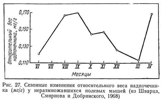 Сезонные изменения относительного веса надпочечника (мг/г) у неразмножавшихся полевых мышей