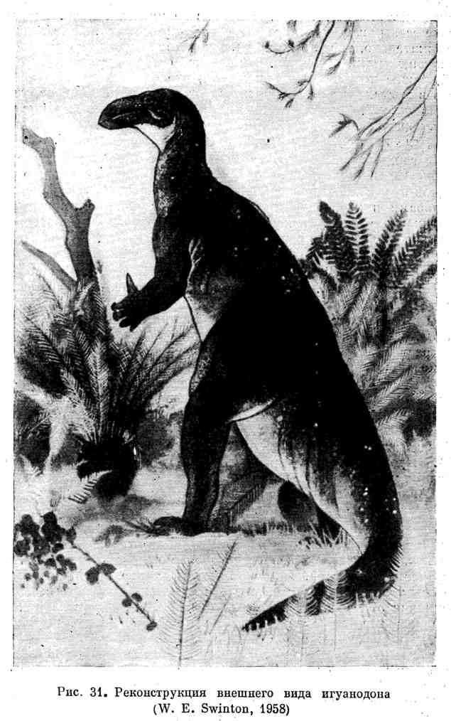 Реконструкция внешнего вида игуанодона