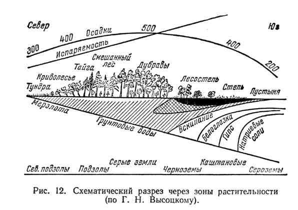 Схематический разрез зоны растительности