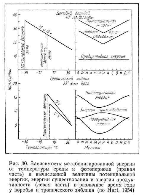Зависимость метаболизированной энергии от температуры среды и фотопериода (правая часть) и вычисленной величины потенциальной энергии, энергии существования и энергии продуктивности (левая часть) в различное время года у воробья и тропического зяблика