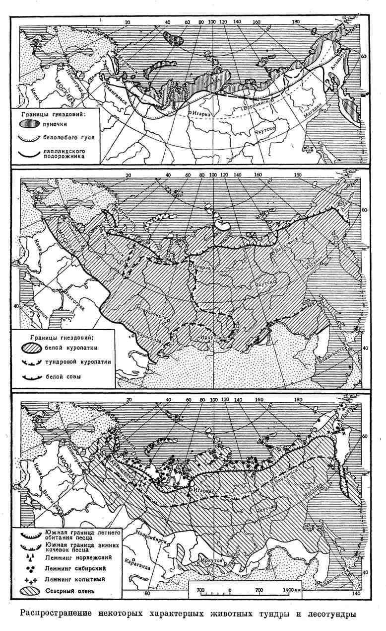 Распространение некоторых характерных животных тундры и лесотундры