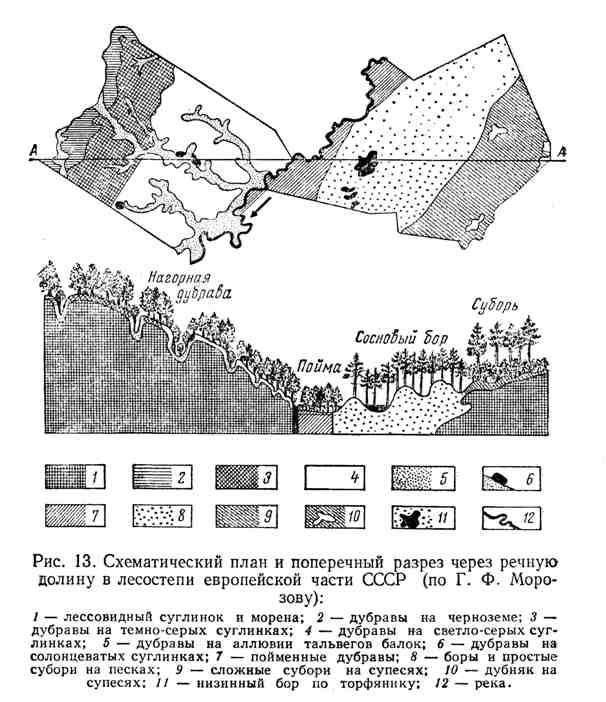 Схематический план и поперечный разрез через речную долину в лесостепи европейской части СССР