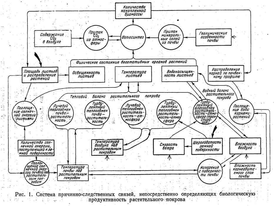 Схема причинно-следственных связей, непосредственно определяющих биологическую продуктивность растительного покрова