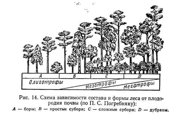 Схема зависимости состава и формы леса от плодородия почвы