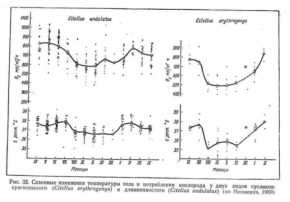 Сезонные изменения температуры тела и потребления кислорода у двух видов сусликов: краснощёкого и длиннохвостого