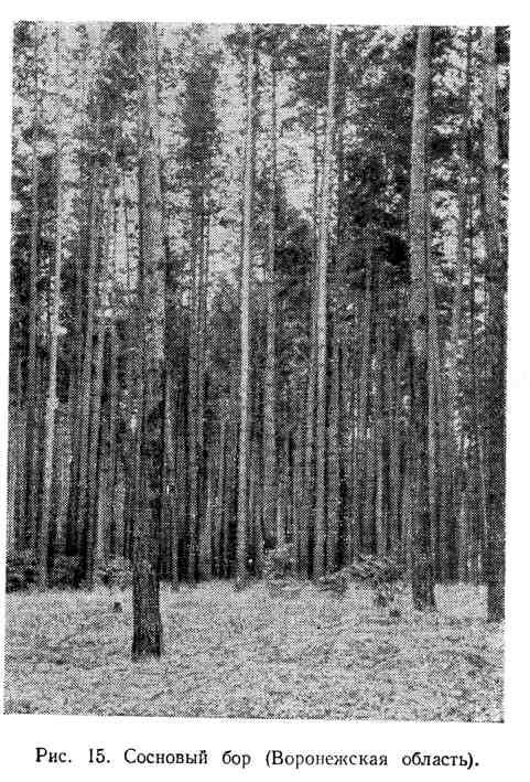 Сосновый бор (Воронежская область)