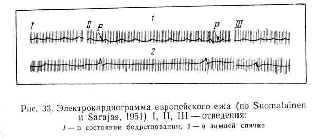 Электрокардиограмма европейского ежа