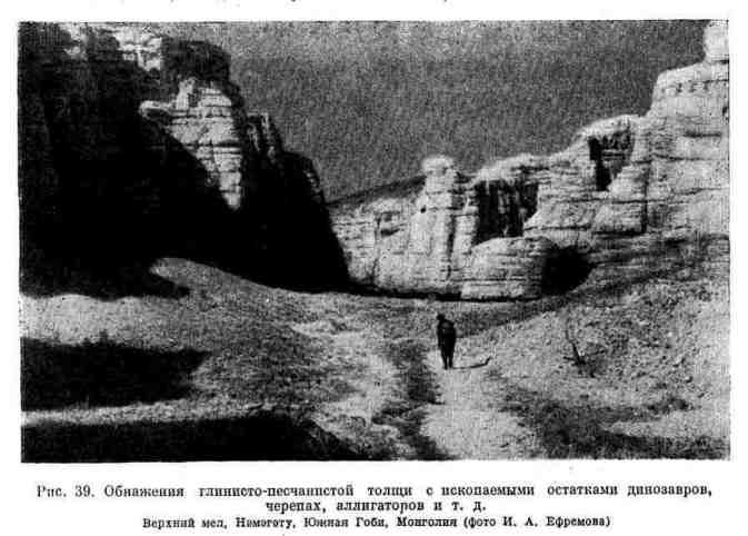 Обнажения глинисто-песчанистой толщи с ископаемыми остатками динозавров, черепах, аллигаторов и т. д.