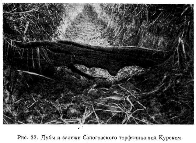 Дубы и залежи Сапоговского торфяника под Курском