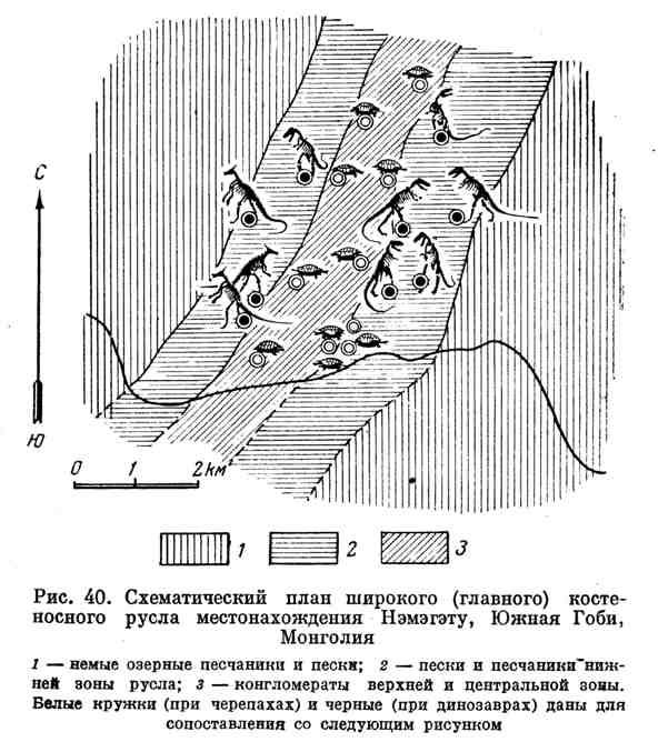Схематический план широкого костеносного русла местонахождения Нэмэгэту, Южная Гоби, Монголия