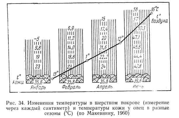 Изменения температуры в шерстном покрове и температуры кожи у овец в разные сезоны