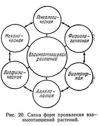 Схема форм проявления взаимоотношений растений