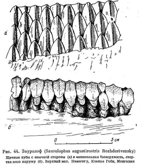 Зауролоф