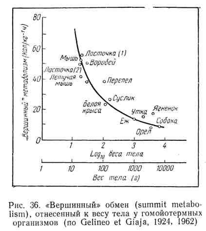 """""""Вершинный"""" обмен, отнесённый к весу тела у гомойотермных организмов"""