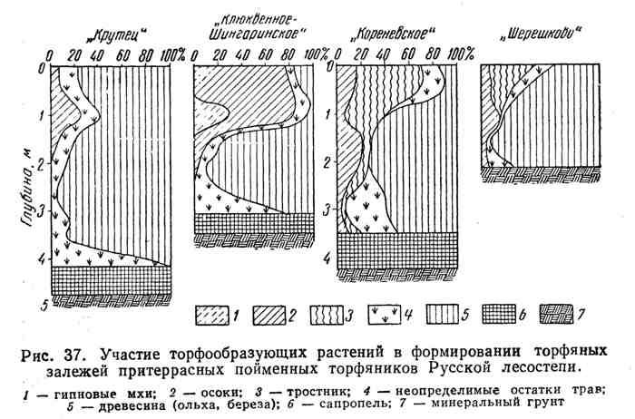 Участие торфообразующих растений в формировании торфяных залежей притеррасных пойменных торфяников Русской лесостепи
