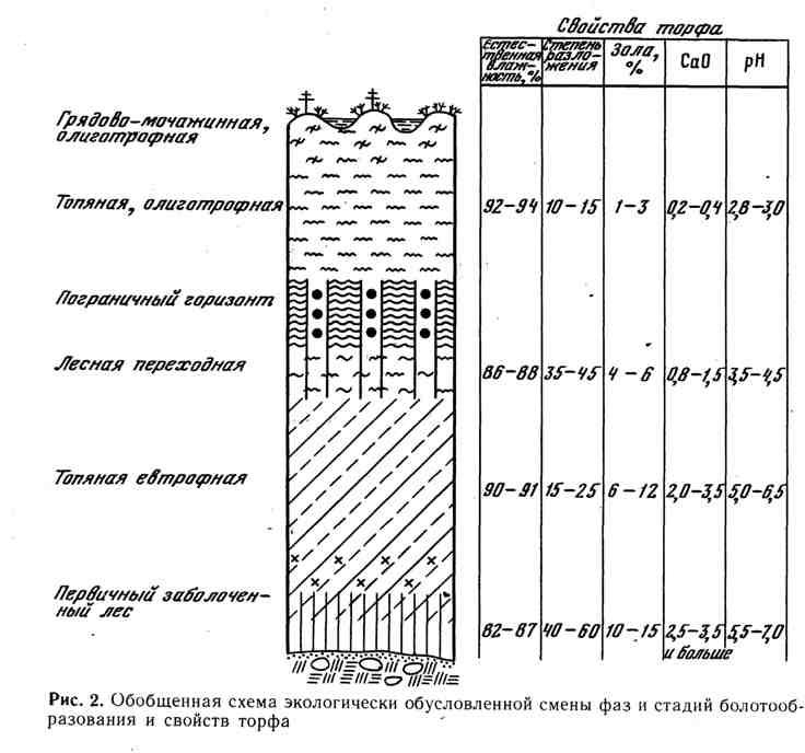 Обобщённая схема экологически обусловленной смены фаз и стадий болотообразования и свойств торфа