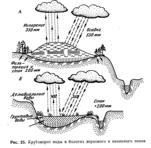 Круговорот воды в болотах верхового и низового типов
