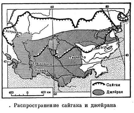 Распространение сайгака и джейрана