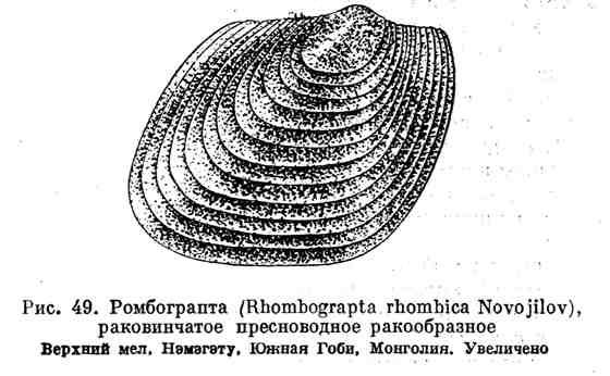 Ромбограпта