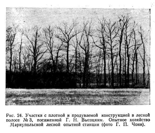 Участки с плотной и продуваемой конструкцией в лесной полосе, посаженной Г. Н. Высоцким
