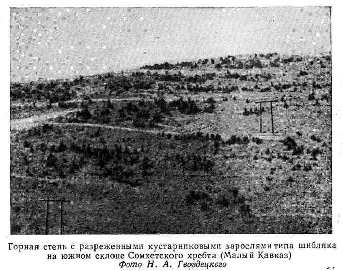 Горная степь с разреженными кустарниковыми зарослями типа шибляка на южном склоне Сомхетского хребта (Малый Кавказ)