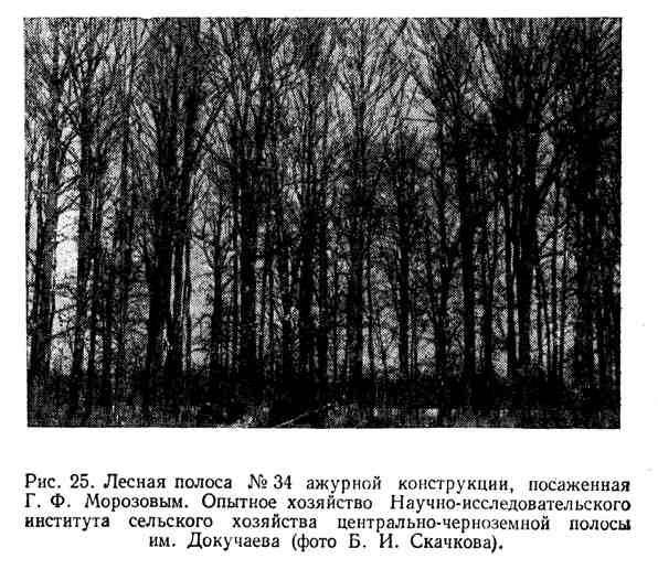 Лесная полоса ажурной конструкции, посаженная Г. Ф. Морозовым