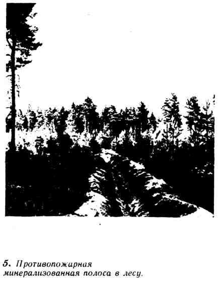 Противопожарная минерализованная полоса в лесу