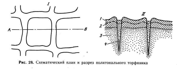 Схематический план и разрез полигонального торфяника