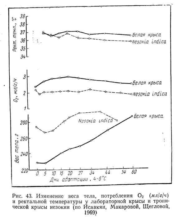 Изменение веса тела, поотребления кислорода и ректальной температуры у лабораторной крысы и тропической крысы незокии