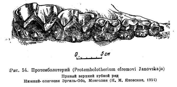 Протемболотерий