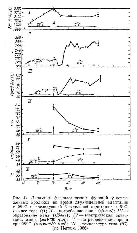 Динамика физиологических функций у остриженных кроликов во время двухнедельной адаптации к 28 градусам по цельсию и последующей 3-недельной адаптации к 6 градусам по цельсию