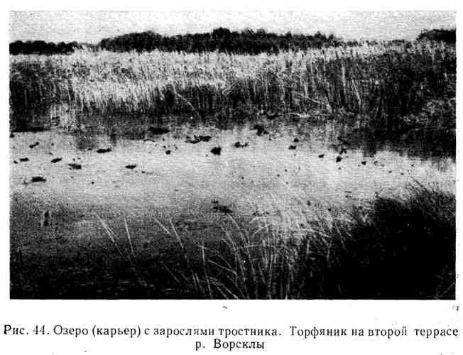 Озеро (карьер) с зарослями тростника. торфяник на второй террасе р. Ворсклы