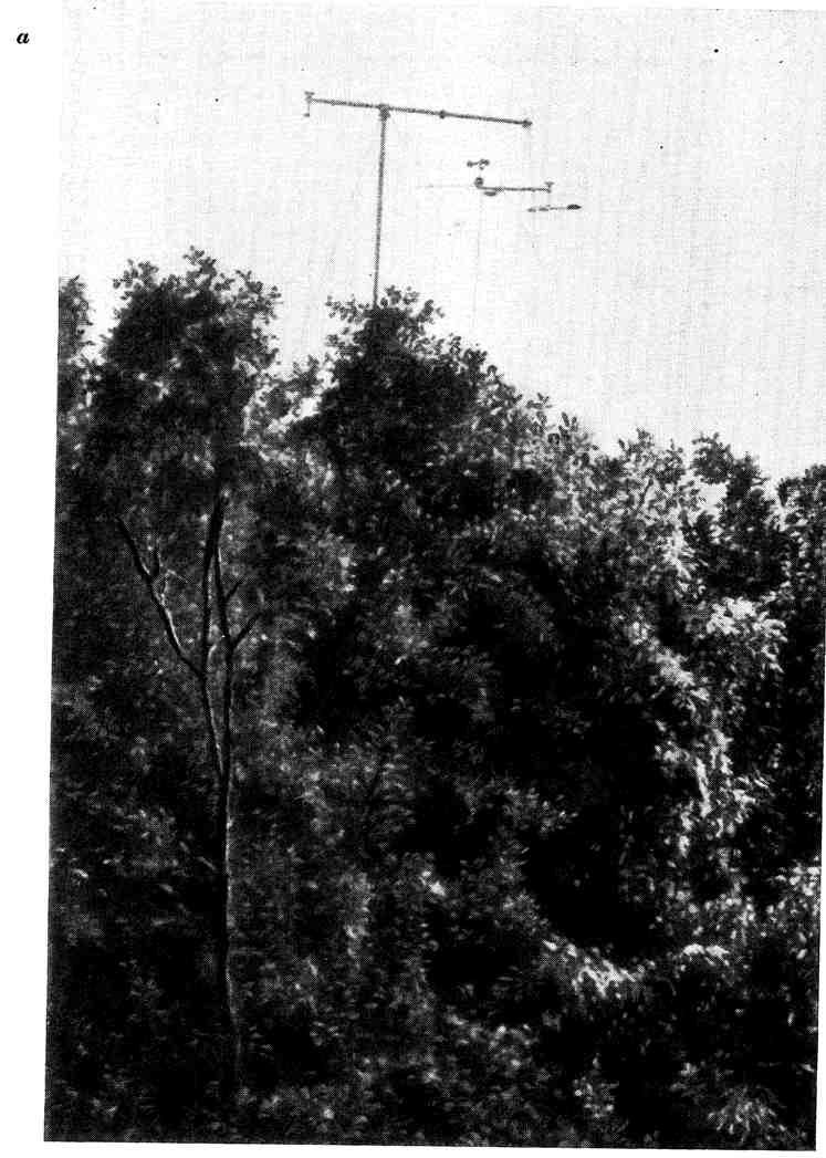 Актинометрическая мачта с кареткой для измерения составляющих радиационного баланса над лесом и внутри леса