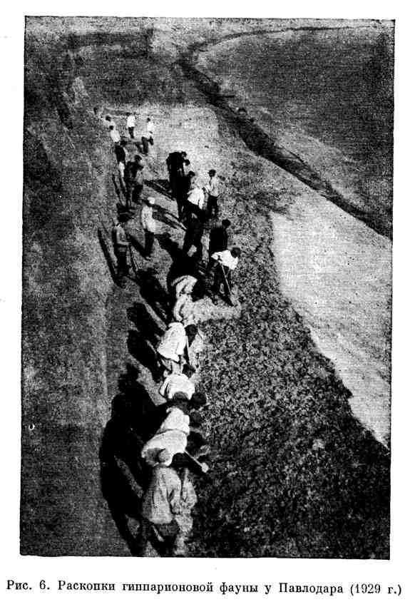 Раскопки гиппарионовой фауны у Павлодара (1929 г.)