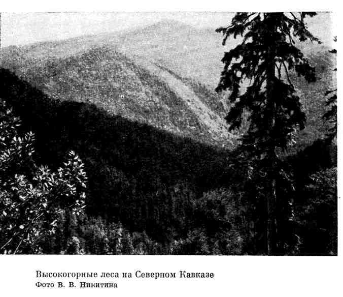 Высокогорные леса на Северном Кавказе