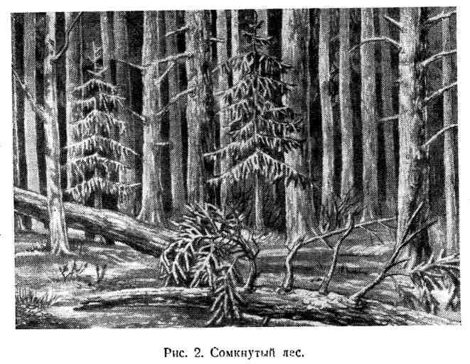 Сомкнутый лес
