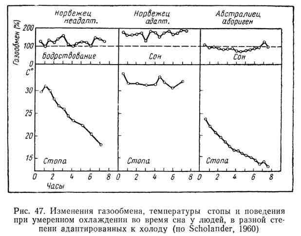 Изменения газообмена, температуры стопы и поведения при умеренном охлаждении во время сна у людей, в разной степени адаптированных к холоду