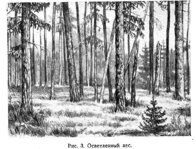 Осветлённый лес