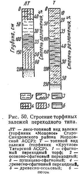 Строение торфяных залежей переходного типа