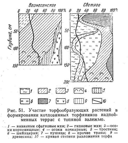 Участие торфообразующих растений в формировании котловинных торфяников надпойменных террас с топяной залежью